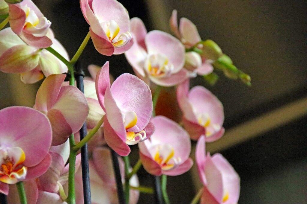 Wüster Blumenladen